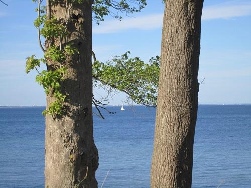 Bäume-alle