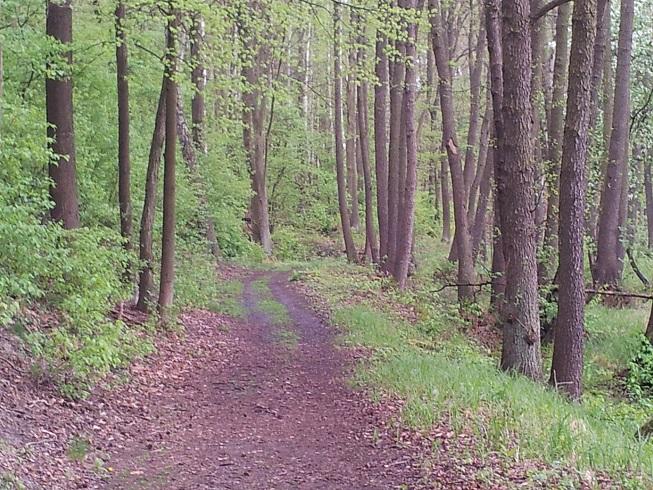 Waldpaziergang