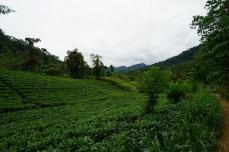 Vegetation3