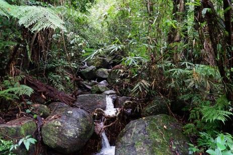Vegetation4