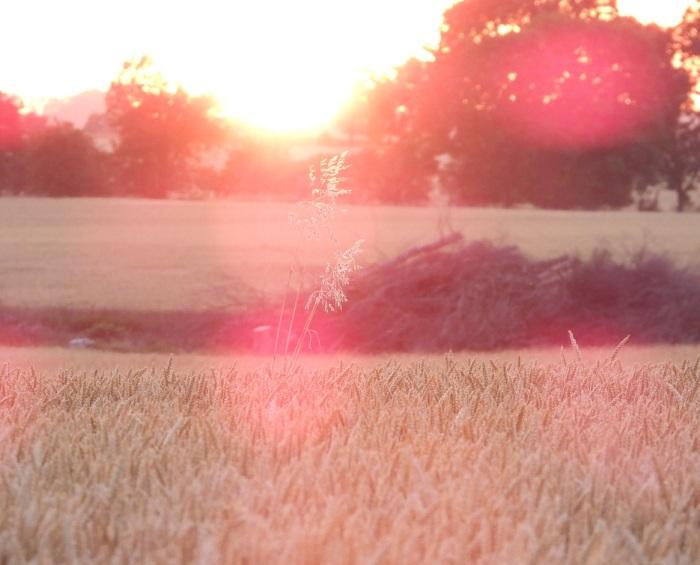 Tagesausklang-Sommerabend