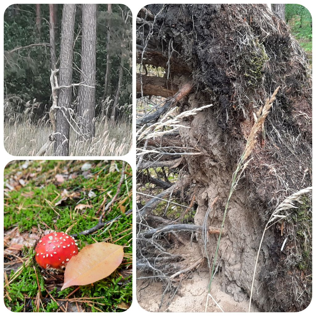 Herbst-Wald_Privat_E