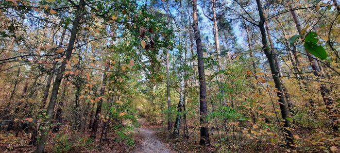 Herbst_Wald2_Privat_Elke