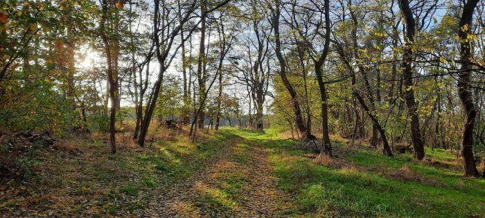 Herbst_Wald_im_November_Privat_E