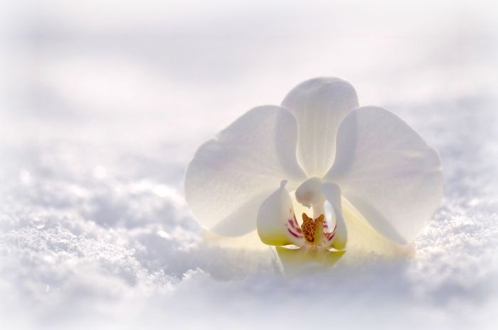 orchid-2952074_1920-2