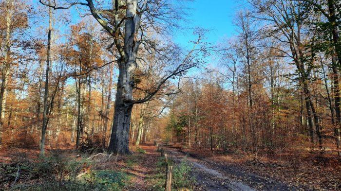 Waldspaziergang_November 2020 Privat-E