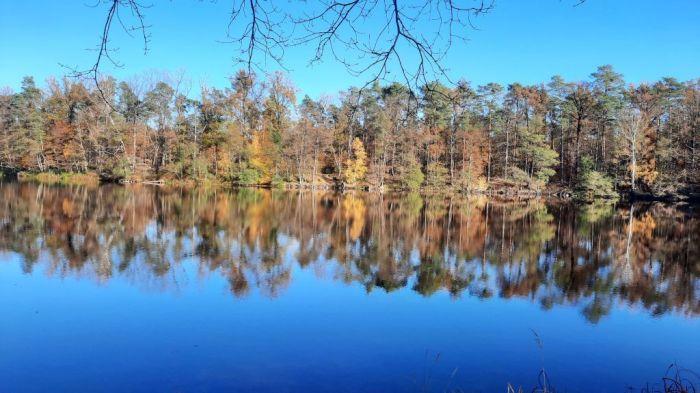 Waldspaziergang_November 2020_12Privat-E
