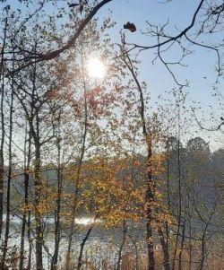 Waldspaziergang_November 2020_22Privat-E