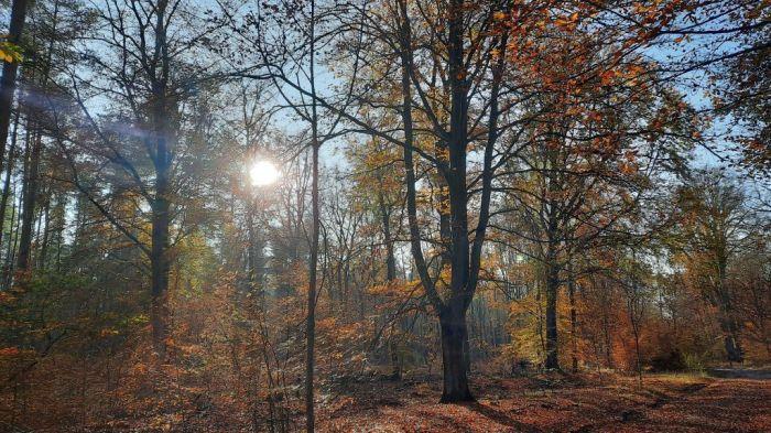Waldspaziergang_November 2020_2Privat-E