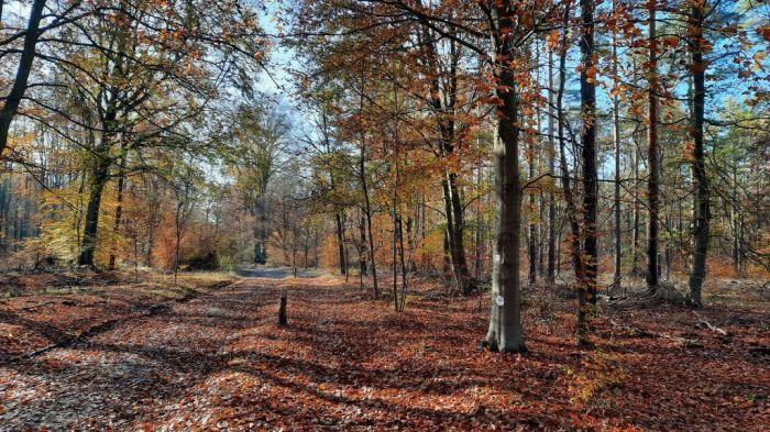 Waldspaziergang_November 2020_3Privat-E