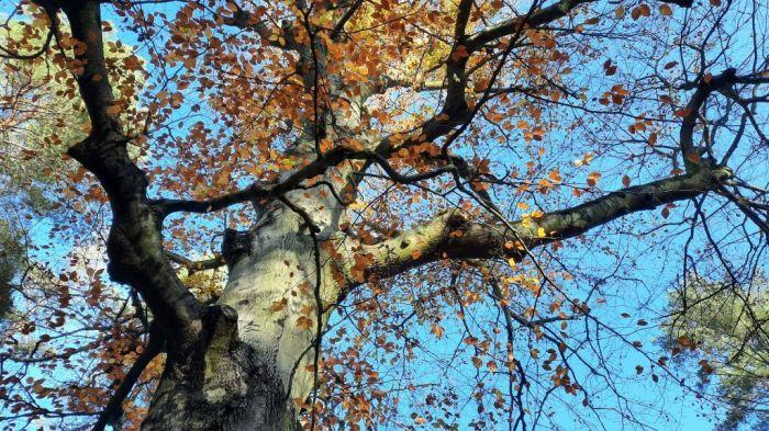 Waldspaziergang_November 2020_4Privat-E