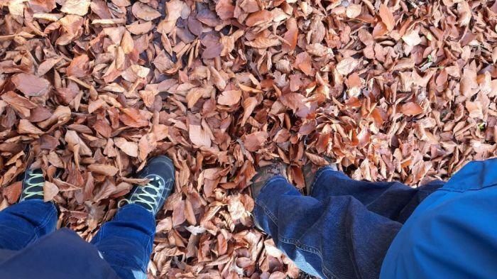 Waldspaziergang_November 2020_5Privat-E