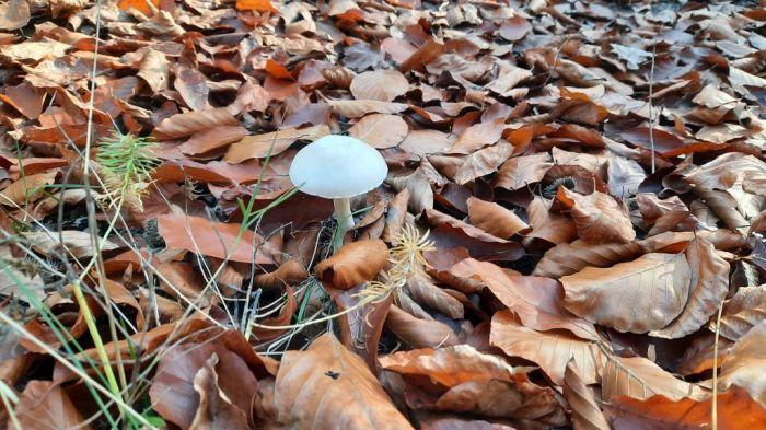 Waldspaziergang_November 2020_6Privat-E