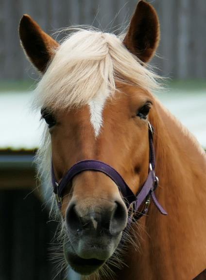 Pferdchen-2