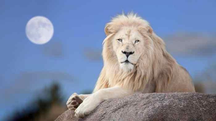 Zarah-Abenteuer 13.07.2021 lions-gate-2021